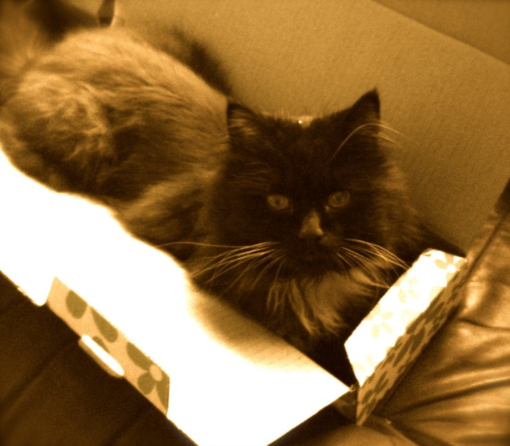 Photo of fluffy, our cat playing in a box.